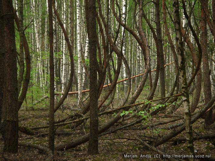 Культура рязанско-окских могильников-древние амазонки в центральной России?